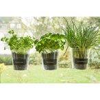 """Lot de 3 pots ? plantes aromatiques avec ventouses. Faciles ? fixer sur les vitres. Livr?s sans plantes. D?coratifs et pratiques ?"""" diam?tre : 13 cm ?"""" hauteur?: 16 cm. R?utilisables ? volont? ?"""" pour plus de place dans votre cuisine."""