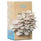 Faites pousser de d?licieux pleurotes gris avec le kit ? champignons de Pr?t ? Pousser Dans votre cuisine, ouvrez la boite, arrosez-la une fois par jour et, apr?s une semaine, savourez vos pleurotes.