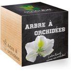 L'arbre ? orchid?es provient du sud-est de l'Asie. Il porte ce nom car ses fleurs ressemblent ? celles d'une Orchid?e. Un article de style naturel et durable.